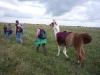 lamatrekking-wg1-2011-102