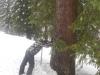 Kind im Schnee bei einem Baum anhaltend