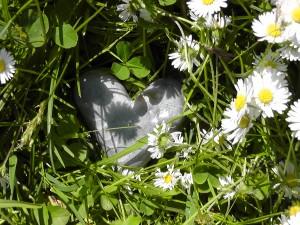 Steinherz in der Blumenwiese