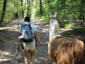 Kind mit Lama im Wald