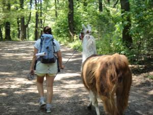 Lama wird von einem Kind durch den Wald geführt