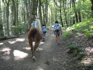 Lama wird von 2 Kindern geführt