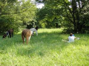3 Lamas stehen in der Wiese 2 Kinder sitzen dabei
