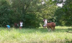2 Lamas und 3 Kinder in der Wiese