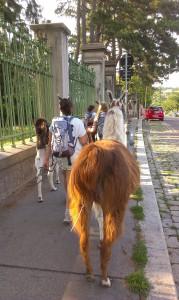 Kindergruppe mit Lama