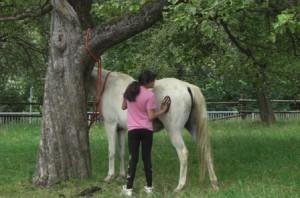 Pferd mit Kind auf der Wiese