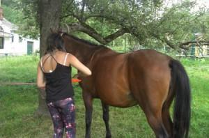 Pferd wird von einem Kind bemalt
