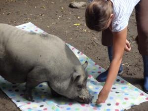 Schwein Batman und ein Kind im Sommer 14