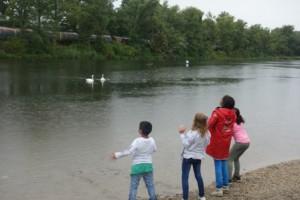4 Kinder am Ufer eines Sees - im Hintergrund Schwäne
