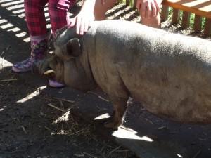 Schwein Obelix