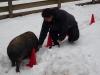Schwein und eine Person im Schnee