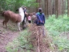 Lamas im Wald