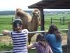 ein-kamel-im-vordergrund-drei-kinder
