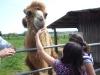 kamel-wird-von-2-kindern-gestreichelt