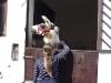 lamatrekking-wg1-2011-084