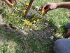 Blumen gelegt auf der Wiese