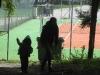 lamawanderung-wg1wg2-01-09-2010-009