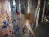 kreativ gestalteter Vorhang im Lamagehege